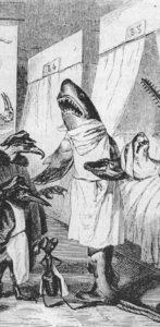 Fig.29 Grandville squalo