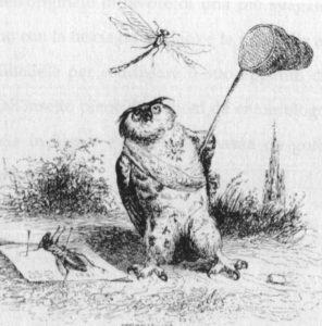 Fig.33 Grandville gufo